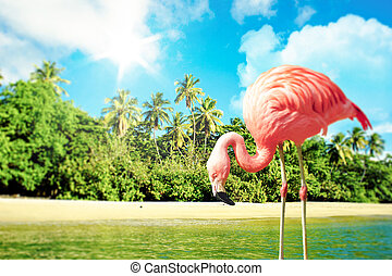 Pink flamingo in the water on a tropical scenery - High...