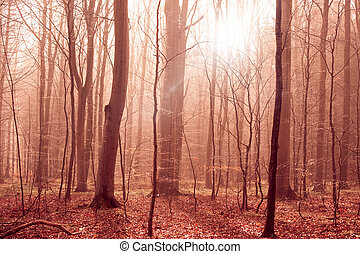Misty forest foliage with sunligt in the morning