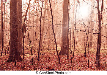 Misty forest foliage in warm colors