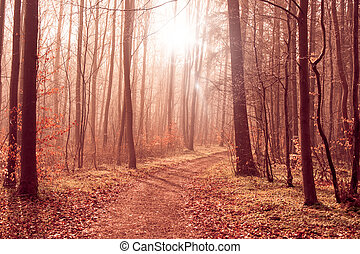 Misty forest path in the woods