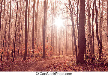 Misty forest foliage with tall trees