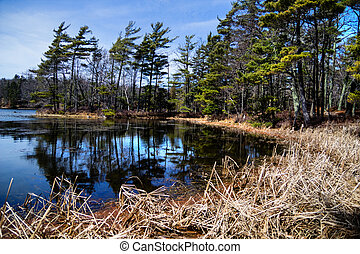 Wetland Habitat - Shores of a protected wilderness wetland....