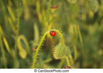 Lady Bug - photo of lady bug on a green plant