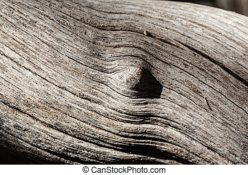 Wood knot - macro shot of a knotted and weathered tree trunk
