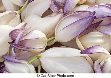Yucca flowers - Macro closeup of pile of fresh picked...