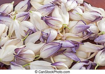 Yuca, flores