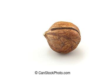 Single Shelled Hazelnut on White close up - Close-up of a...