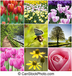 Flower collage - Beautiful flower collage made from nine...