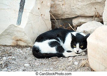Athenian cat - Greek cat resting in the ruins of Acropolis,...