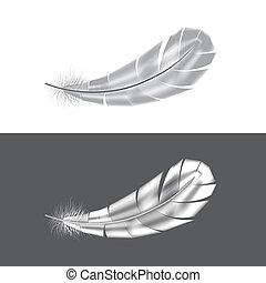 Grey and white feathers vector illustration