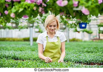 Woman gardening. Beautiful young blond hair woman in apron...