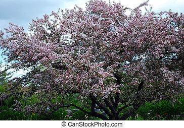 Flowering tree against the sky