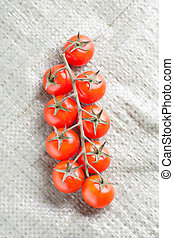 Branch of tomatoes from above