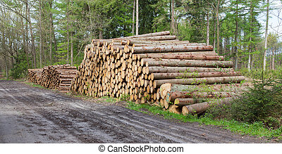 Stacked timber in a dutch forrest - Forrest industry,...