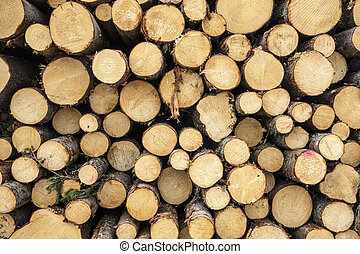 wood logs - Texture of wood logs background