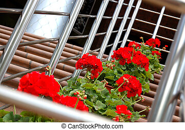 red flowers on a stair