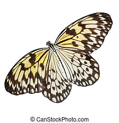 Idea leuconoe butterfly isolated on a white