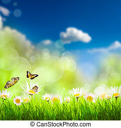 Spring background with grass and camomiles