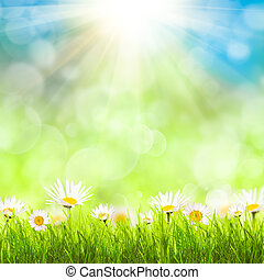 Spring background with camomiles - Spring background with...