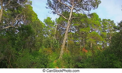Trees in National park on island Mljet, Dubrovnik...