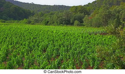 Field vines - FieldField vines vines near small village on...