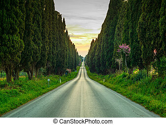 Bolgheri famous cypresses trees straight boulevard...