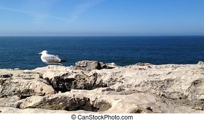 Seagulls on the rocks with sea in background