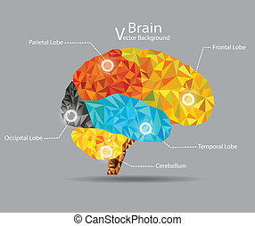 Brain Geometric Shape Vector Background