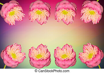 Twain pink water lily flower on color light background