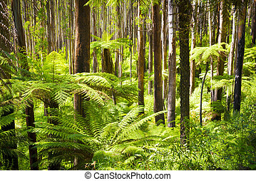 Fern Forest - Lush green ferns, tree ferns and towering...