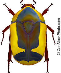 African flower chafer - An illustration of an african flower...