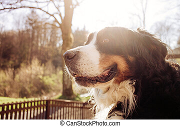 Portrait of dog in the forest, sunshine, vintage