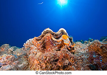 ocean, sun and giant clam - ocean, sun andgiant clam