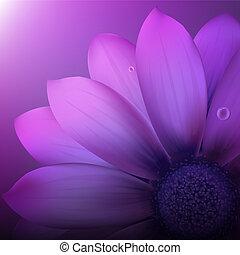 Violet Gerber - Fresh Violet Gerber