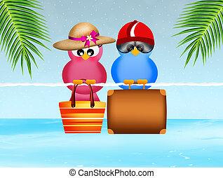 Oiseaux, aller, vacances