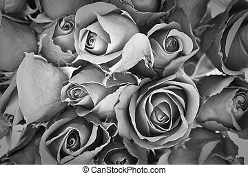sorrow rose - background of rose, black and white effect