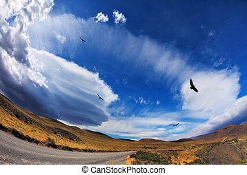 Gravel road  and Andean condors