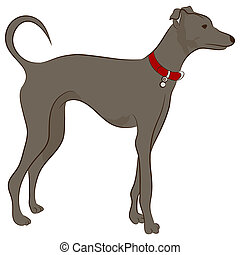 Greyhound Dog - An image of a greyhound dog