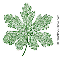 Vector leaf isolated. Macro illustration. - Vector leaf...