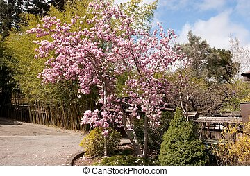 Hakone Gardens is a traditional Japanese garden in Saratoga,...