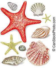 Set of seashells. Vector illustration.