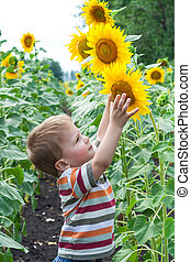 Little boy with sunflower - Little boy reaches for sunflower...