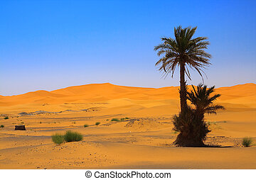 palm tree on Sahara desert Erg Chebbi, Morocco
