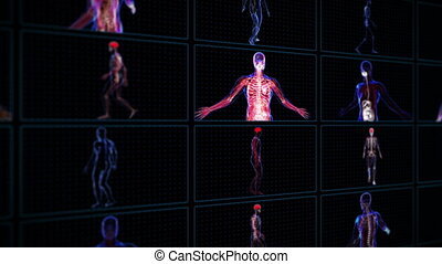 Anatomy of the human body - All human body systems in multi...