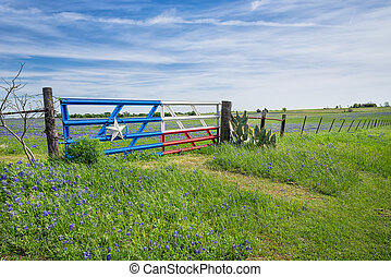 Texas bluebonnet field and fence in spring - Bluebonnet...