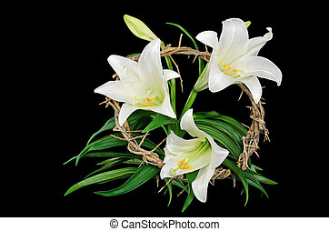 Easter lily with crown of thorns - White Easter lily with...