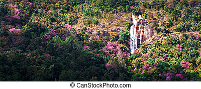 Cherry blossom blooming on tropical mountain