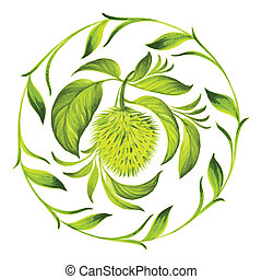 decorative circle soursop with leaves - hand drawn...