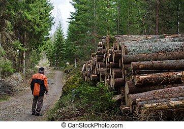 Lumberjack at a logpile of softwood at a dirt road in the...