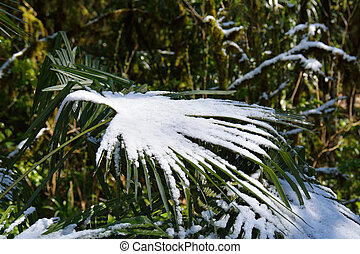 Snow on the palm - Cold conceipt: snow on the palm tree leaf